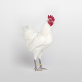 edition-dmitri-galitzine-best-miniature-soft-feather