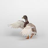 edition-dmitri-galitzine-best-waterfowl