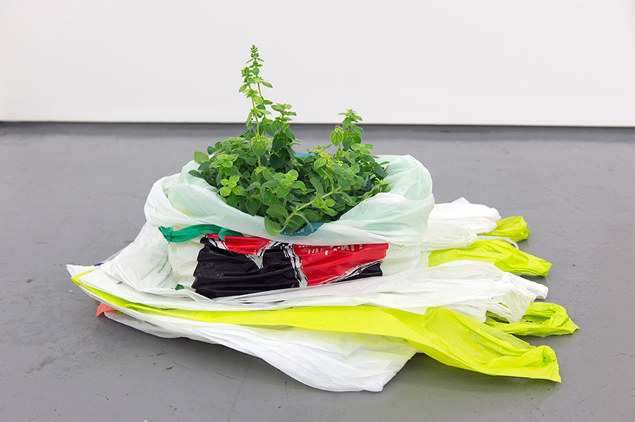 <b>Title: </b>Houses, towns or cities, monuments or factories<br /><b>Year: </b>2016<br /><b>Medium: </b>Oregano plant and plastic bags<br /><b>Size: </b>Dimensions variable